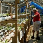 Small Space Aquaponics Feeds the Community