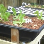 Aquaponics Hybrid Urban Growing Systems introduced by Sahib Aquaponics