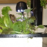 "Aquaponics Hybrid Urban Growing Systems by Sahib Aquaponics:  ""Nano"" System"