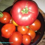 heirloom-tomato-small-bowl